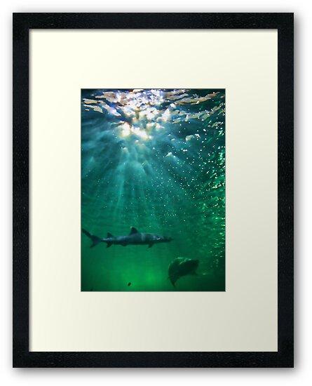 Predators! Sydney Aquarium - Australia by Bryan Freeman