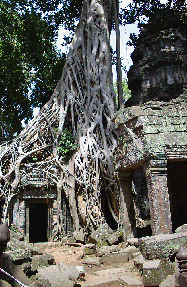 Earthbound - Ta Prohm by Deirdreb