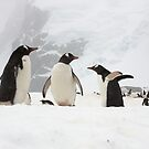 Gentoo Penguins ~ &quot;Our World&quot; by Robert Elliott