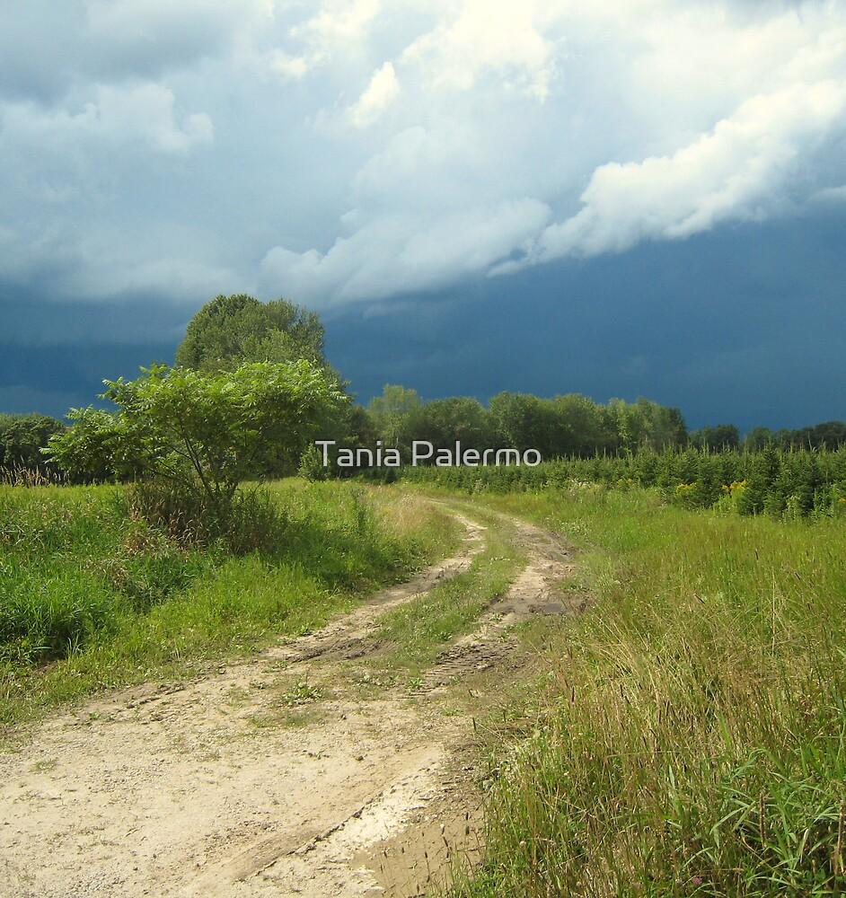 Fryeburg Road by Tania Palermo