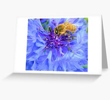Bee on  Blue Greeting Card
