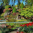 Spring in the Garden by AnnDixon