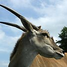 Antelope by Mel Preston