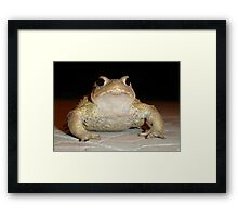 Common European Toad Framed Print