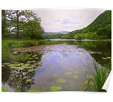 The Lake District: Rydal water Lillies Poster