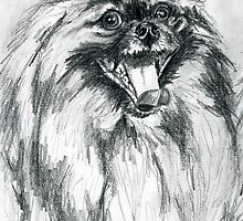 Pomeranian by Linda Costello Hinchey