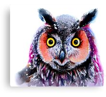 """Long eared owl"" Canvas Print"