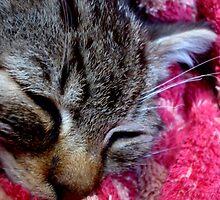sleeping Bast by AylaNeferiah