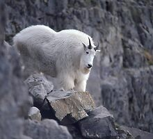 King of the Mountain by R. Mike Jacobson