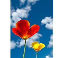 Poppy and sky Photographic Print