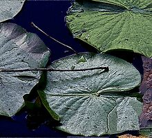 """life of a lily pad"" part 1 by Nicholas  J Mast"