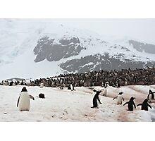 "Gentoo Penguins ~ ""Penguinville, Curville Island, Antarctica"" Photographic Print"