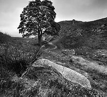 Sycamore Gap Mono (Robin Hood's Tree) by Ritchie Coatsworth