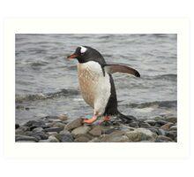 "Gentoo Penguin ~ ""On The Go"" Art Print"