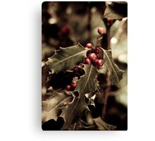 Holly bush with red berries III Canvas Print