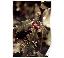 Holly bush with red berries III Poster