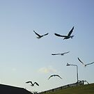 the gulls are in town ! by armadillozenith
