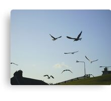 the gulls are in town ! Canvas Print