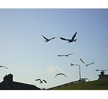 the gulls are in town ! Photographic Print