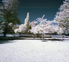 Park  by Arthur Indrikovs
