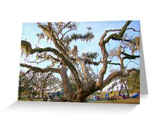 Live Oak Tree Almost Died After Hurricane Katrina Greeting Card