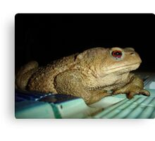 European Common Toad by Poolside At Night Canvas Print