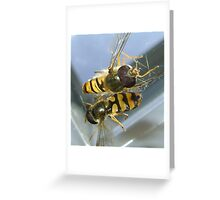 stuck (2 hoverflies) Greeting Card
