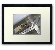 weightless (Cranefly) Framed Print