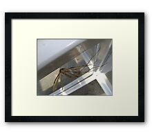 weightless (Cranefly) Framed Print