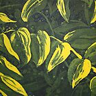 Etching: Leaves in limone by Marion Chapman