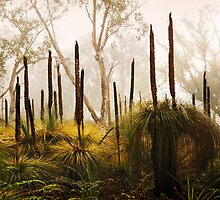 Late Autumn Grass Tree's, Great Ocean Road. by Darryl Fowler