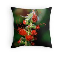 Emerging Bottle Brush Flower Throw Pillow