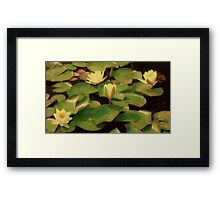 Water Lilies at Sunrise Framed Print