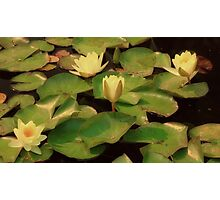 Water Lilies at Sunrise Photographic Print