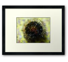 Caterpillar Ball Framed Print