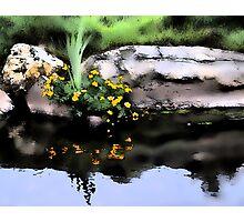 Marsh Marigolds, Photographic Print