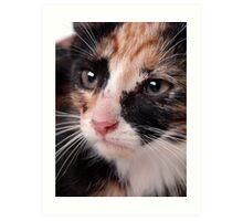 Stray Kitten 2 Art Print