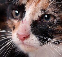 Stray Kitten 2 by angelandspot