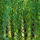 Conifer Curtain by Aileen David