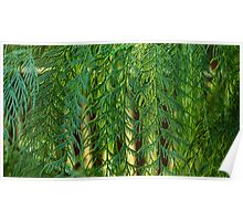 Conifer Curtain Poster