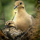 Nesting by George Lenz