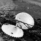 Abandoned Shell by ViktoryiaN