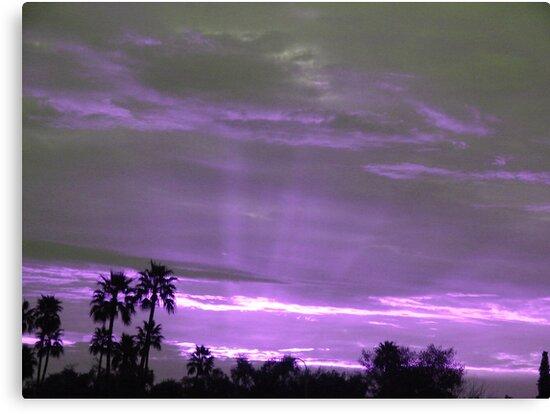 Purple Sun Rays by down23