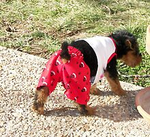 Me in Fancy Pants - GAG  by Tucker The Dog