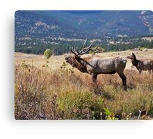Elk call Canvas Print