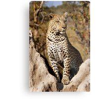 King of the Castle - Okavango Delta, Botswana Metal Print