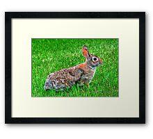 """""""Ready for the Bunny Hop"""" Framed Print"""