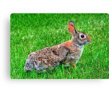 """Ready for the Bunny Hop"" Canvas Print"