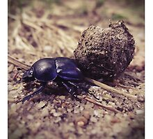 Not a dung beetle... by polaroids