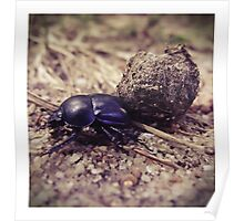 Not a dung beetle... Poster